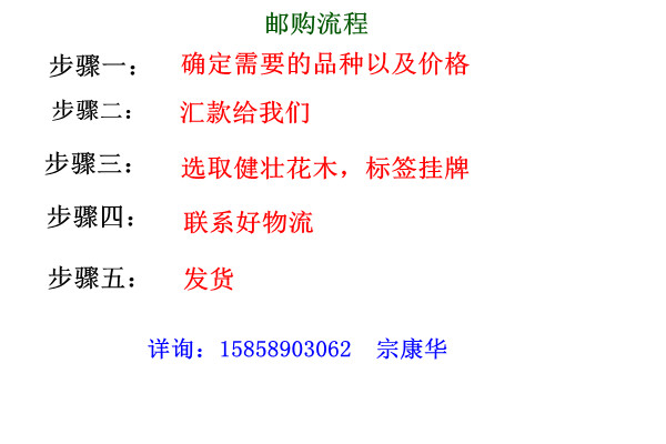 茶花邮购流程